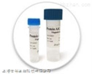 颗粒溶素(GNLY)单克隆抗体
