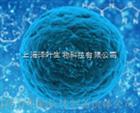 Jurkat, Clone E6-1 (人急性T淋巴细胞白血病细胞)