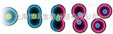 CCK-8 细胞增殖及毒性检测