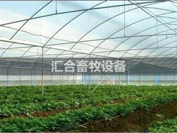 钢结构养殖大棚 吉林标准化建造养殖大棚/温室大棚,技术先进,设计优化