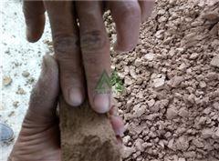 北京机制砂污泥干堆机厂家