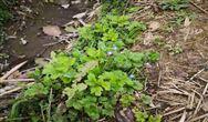污泥低温干化和污泥干化的联系与区别