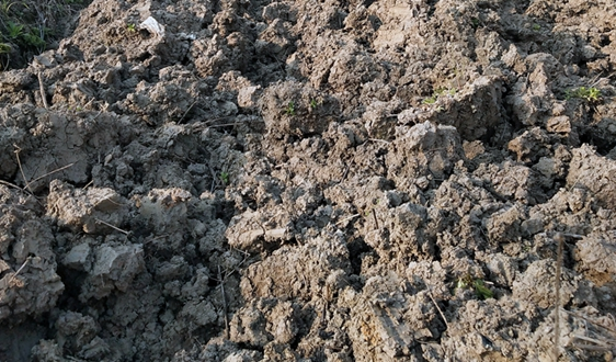 南京土壤所在盐渍化农田改良剂应用对氨挥发影响研究中取得进展