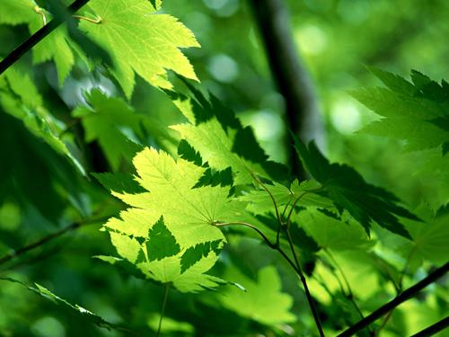 """绿色发展消除""""霾""""伏 提升空气质量让蓝天常驻"""