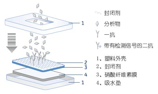 Whatman CF系列吸收垫 | Whatman滤纸滤膜代理