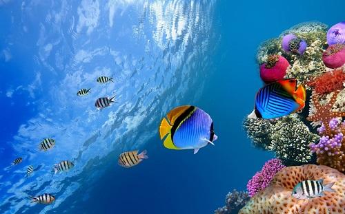 环保手工制作海洋世界