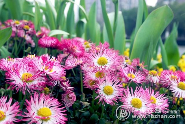 http://www.hjw123.com/shengtaibaohu/86499.html
