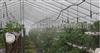 东莞东城蔬菜大棚喷灌系统,温室大棚喷灌工程